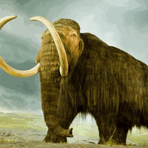 CliffHanga - Mammoth
