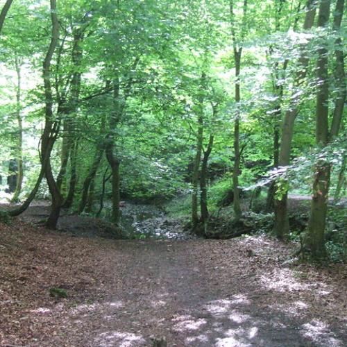 Badock's Wood I - Trees (2012)