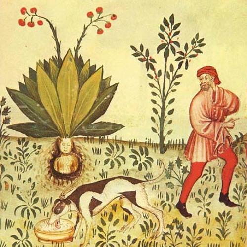 Filippov - Mandragora (Original Mix)
