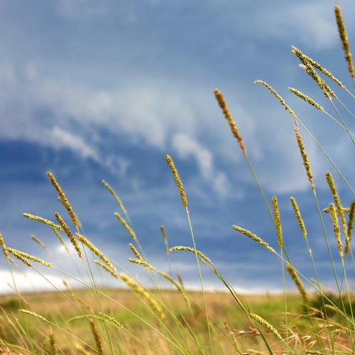Binaural WiredLab GrassWind 16062012