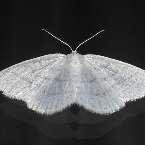 Moth preview [Forthcoming USKY012 - January / 14 / 2013]
