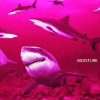Lofty305 - Moisture