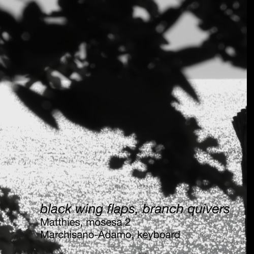black wing flaps, branch quivers