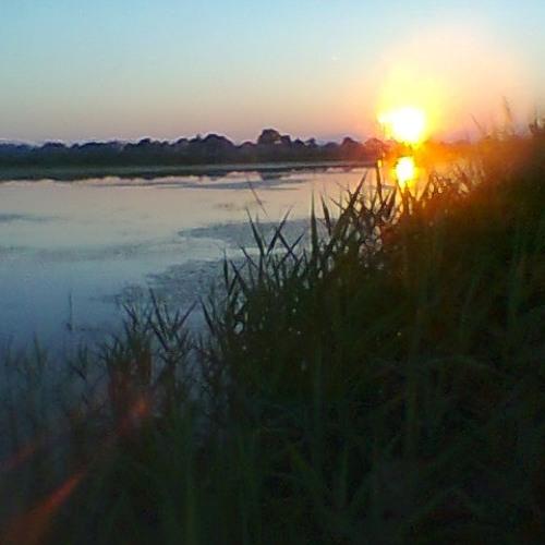 Crna mlaka -Special Ornithological Sanctuary, nocturnal recording SASS