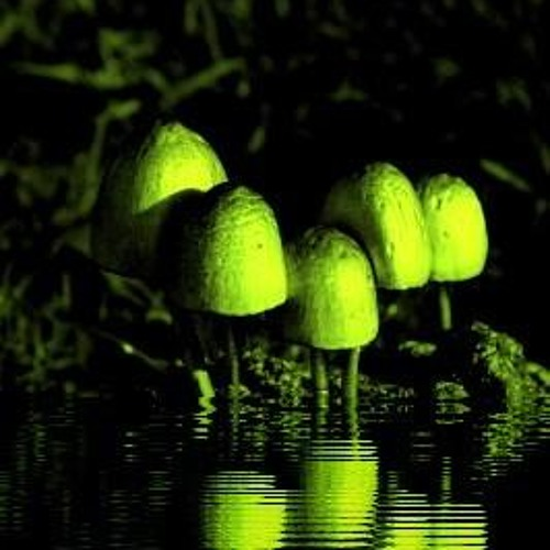 Watersound 777 - Digital Mushroom