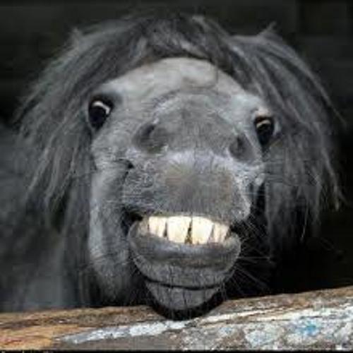 """Horses say, """"HAAAAAAY""""!"""