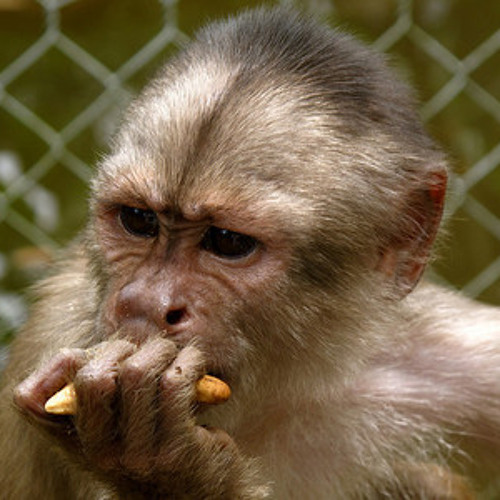 F-U-I-T-A - Stress Monkey (Preview)