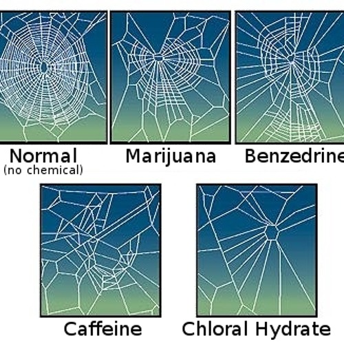 Turns Out - Caffeine Fucks Spiders Up