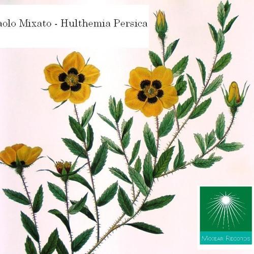 Paolo Mixato - Hulthemia Persica (cut)