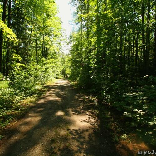 Akhn - Forest