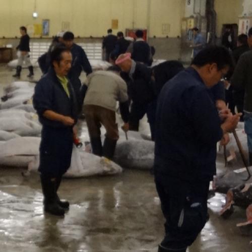 Tsukiji Fish Market Auction at Tokyo, Japan