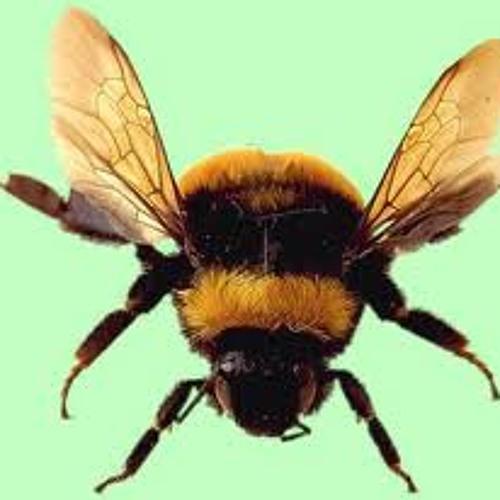 D.Principato - Fat Bee 2005