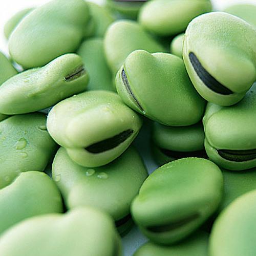 --ooze - Jungle bean's (future meshtrack)
