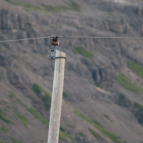Opus for power line, bass, wind, sheep and birds.