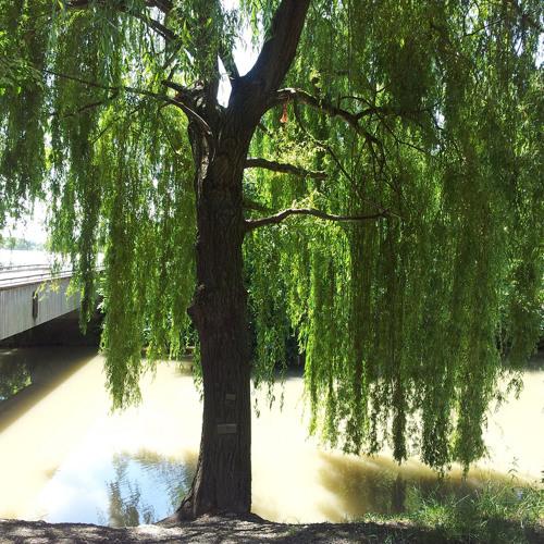 am Canal de Huningue