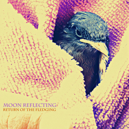 Moon Reflecting - Return of the Fledgeling