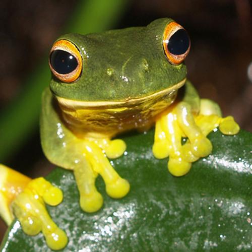 Frogger box Dance PT2 (DJ yarrow)