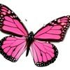 (My Little) Butterfly