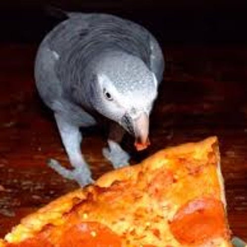 Pizzeria Il Pappagallo 1