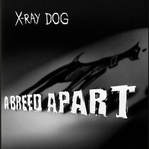 X-Ray dog - Best picture