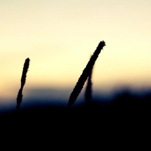 Sylphides - Seuls avec le vent ..