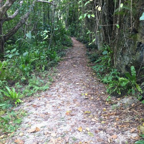 Matapa chasm bush atmos