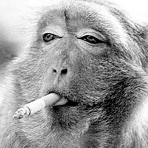 I´m gonna be your Monkey