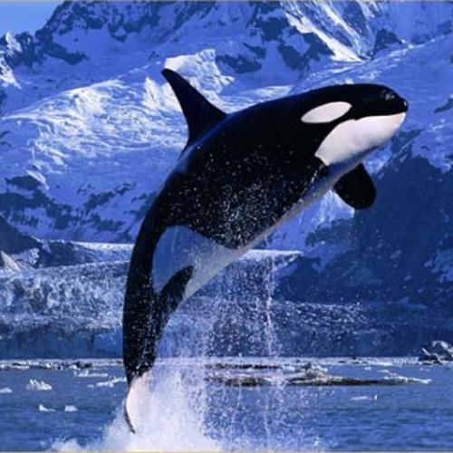 deliriant vs orca - the invigilator