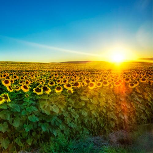 Mark Slee - Summer: Sunflowers Singing Softly [July 2012]