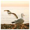 Plasma Seagull D!scotheque - Surfin' Bird (Remix) ft Peter G.