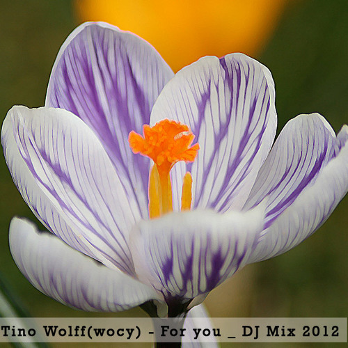 Tino Wolff (Wocy) - For you DJ Mix 02.2012