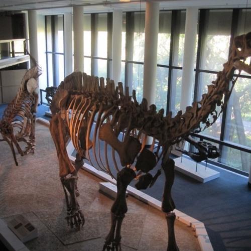 Bateleur - Museum (Fun Toy RMX)