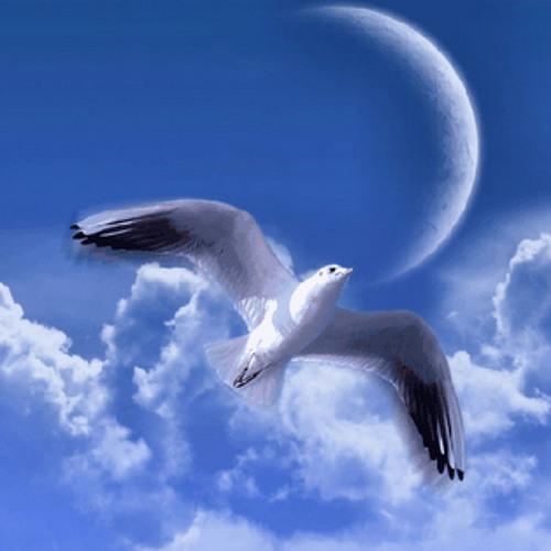 Kaio Pereira - Flying High
