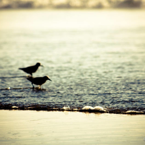 Seagull (Chill Beat) Prod. by DeltaBeatz www.deltabeatz.com