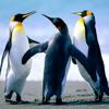 Penguin Mafia