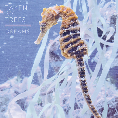 "Taken By Trees -  ""Dreams"""