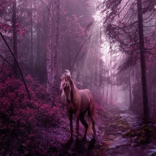 Wild horses cover  at Flint Hill