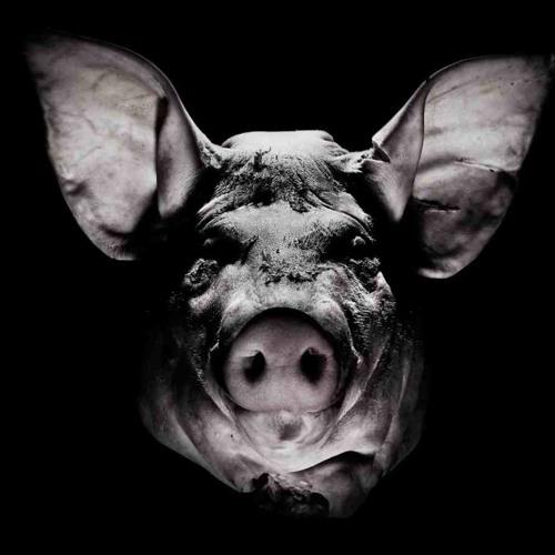 Pig - Shake (Rough Mix)
