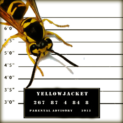 Yellowjacket - From the Grit (Prod. by Yellowjacket)