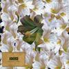 Intel Top Notch Album Cover