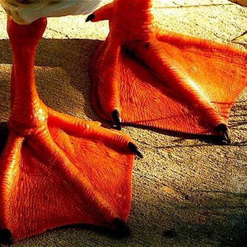 Nick Beeton - Didn't Know (iriXx's I Wish I Had Duck Feet dub)