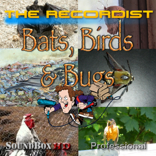 Animals and Insects HD Bundle