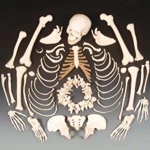 Next Hip-Hop Skeleton-adding meat