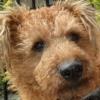 Mucky Pup Boogie/Paul Brennan