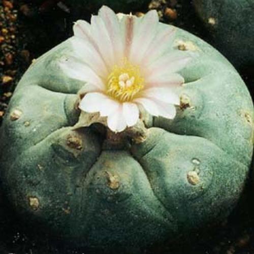 Objekt - Cactus (Archie Pelago Live Overdub)