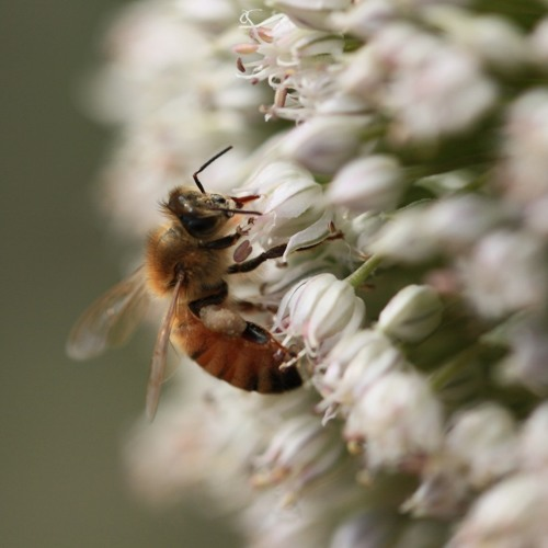 iSeeChange: The Mystery of the Double Queen Bees