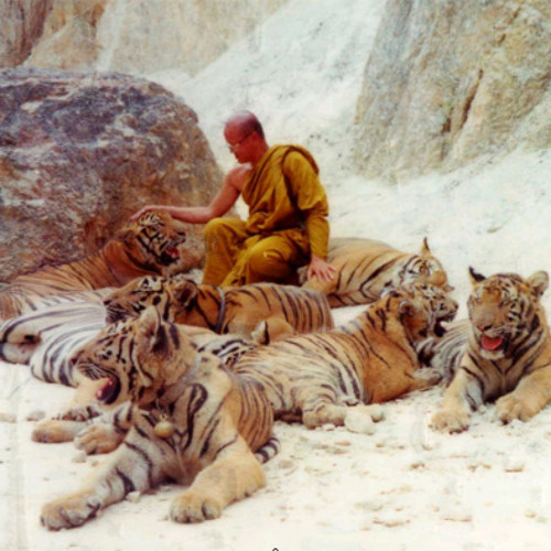 Tiger's Russian sandbox (Brenny & the Tiger HEAVEN & Hell 0011).