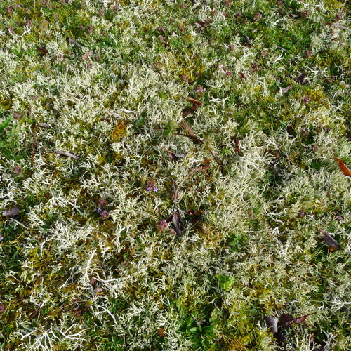 heath moss