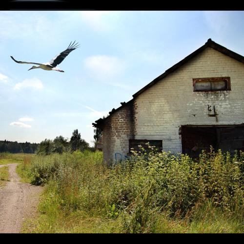 Mihai Sorohan - Broken Flight