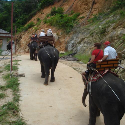 Elephant drinking water during Trek in Phuket, Thailand